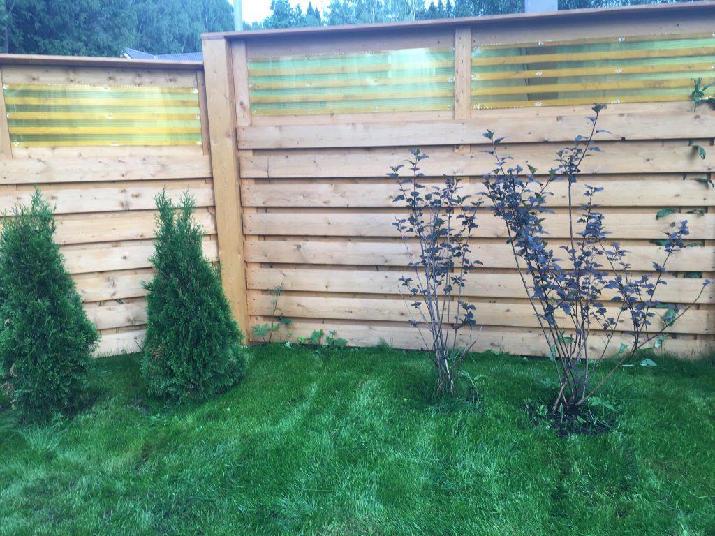 Посевной газон 1